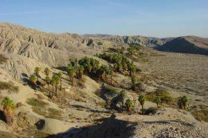 Thousand Palms property management