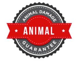 Landing-page-animal